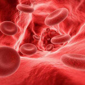 Blood cells in the vein