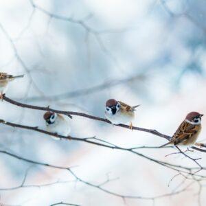 bird feeders. tree house for the birds. Bird feeder in winter p